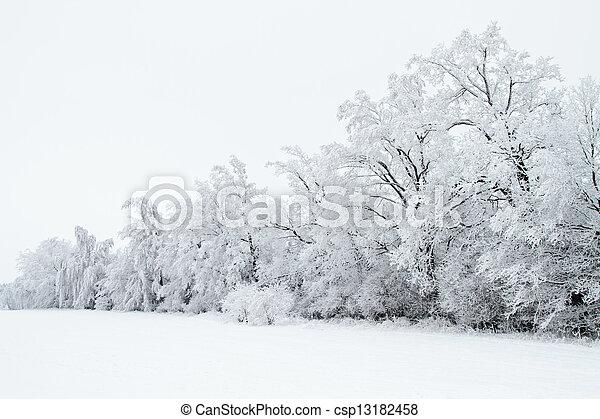 paisagem, árvores inverno, neve - csp13182458