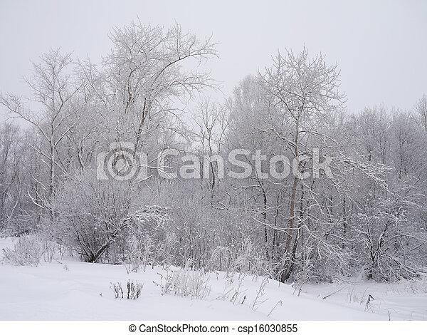 paisagem inverno - csp16030855