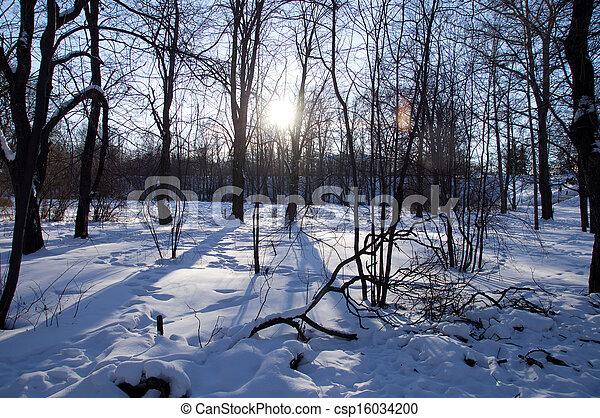 paisagem inverno - csp16034200