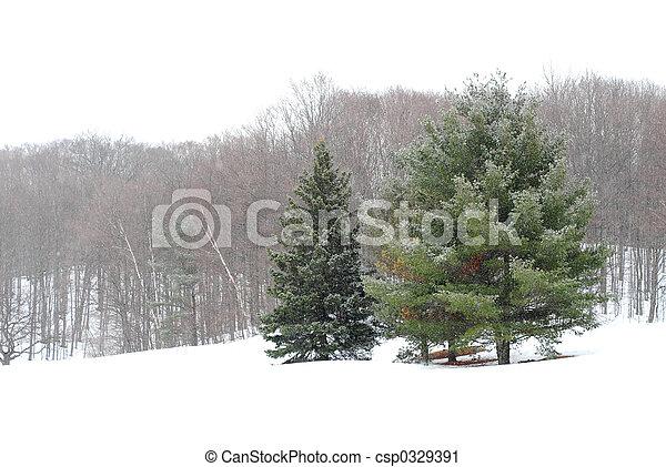 paisagem inverno - csp0329391