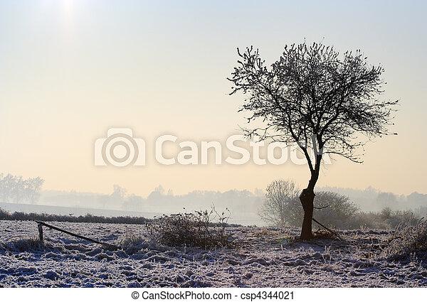 paisagem inverno, nebuloso - csp4344021