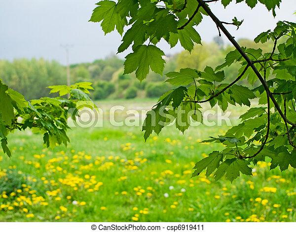 paisagem, natureza - csp6919411