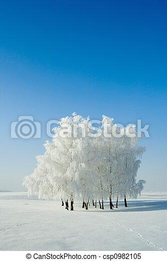 paisajes de invierno y árboles - csp0982105
