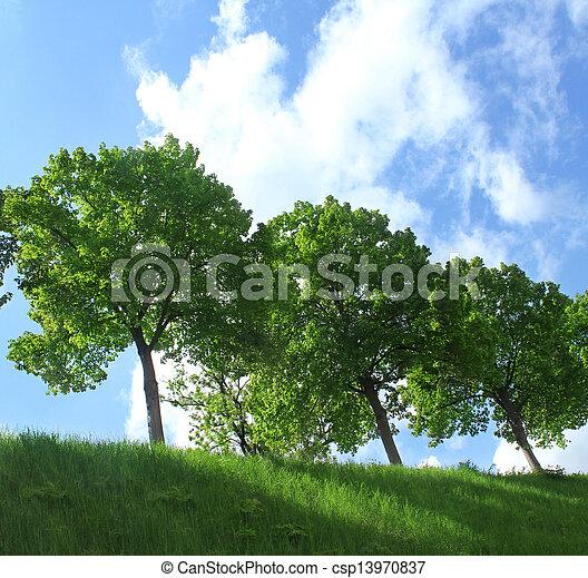 Landscape - csp13970837