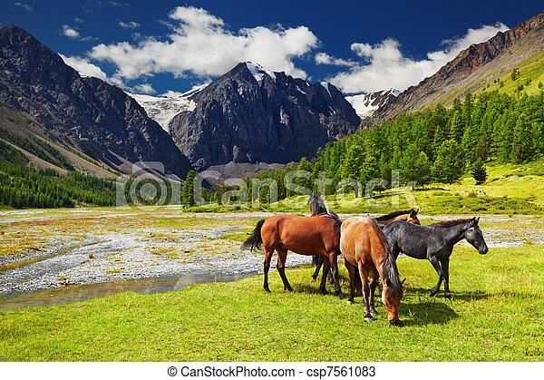 Un paisaje de montaña - csp7561083