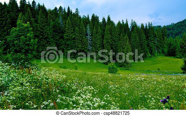 paisaje de montaña - csp48821725