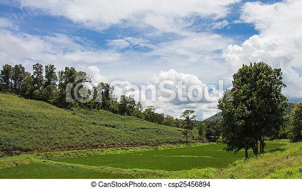 paisaje de montaña - csp25456894