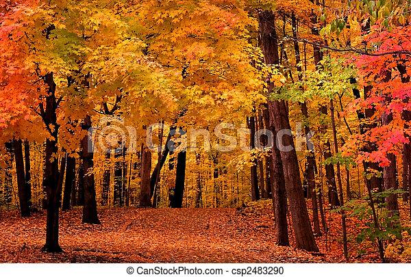 Un paisaje de otoño - csp2483290