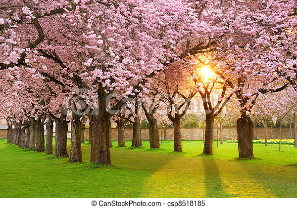 paisaje, fascinante, primavera - csp8518185