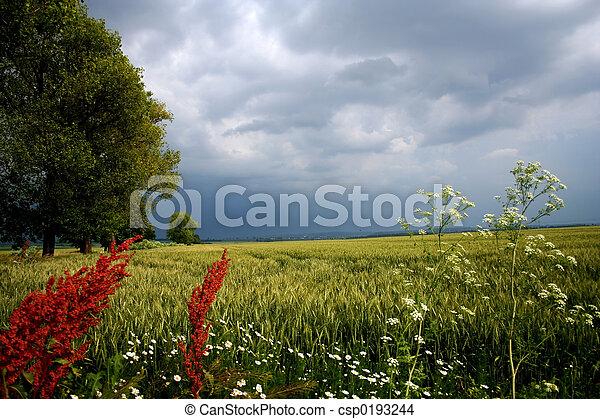 Landscape - csp0193244