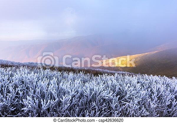 Landscape - csp42636620