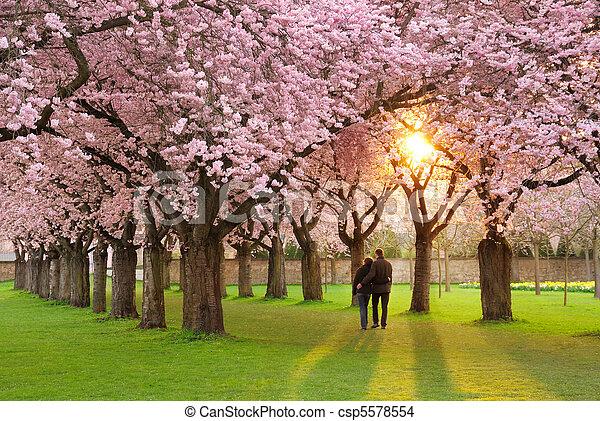 paisaje, magnífico, primavera - csp5578554