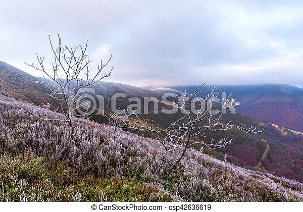 Landscape - csp42636619