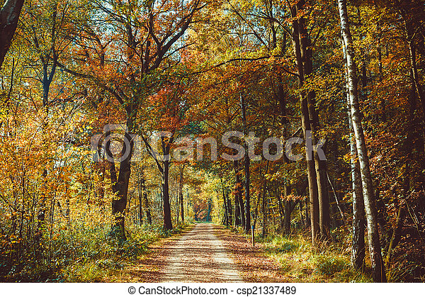 La carretera del bosque. Landscape. Avenida de árboles en el parque. Misty au - csp21337489