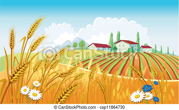 Paisaje rural con campos - csp11864730