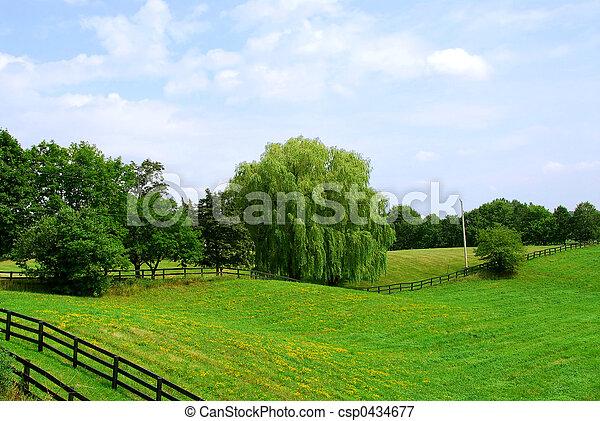 paisaje rural - csp0434677