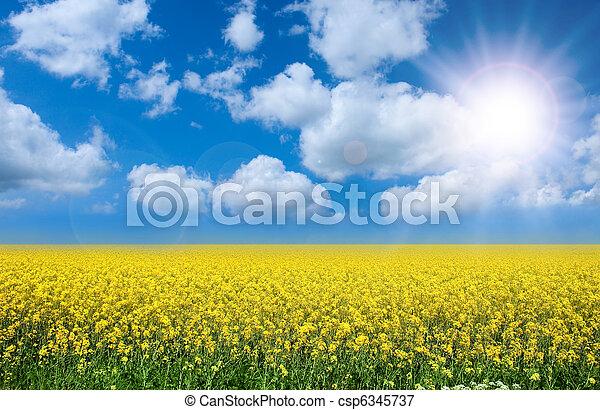 Un paisaje de verano - csp6345737