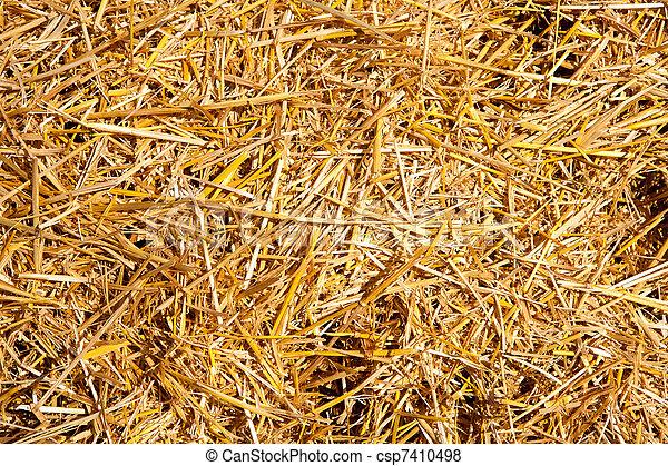 Pajita Cereal justo después de la cosecha - csp7410498