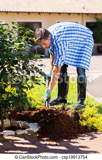 palántázás, cserje, fiatal, saját kert, ember - csp19913754