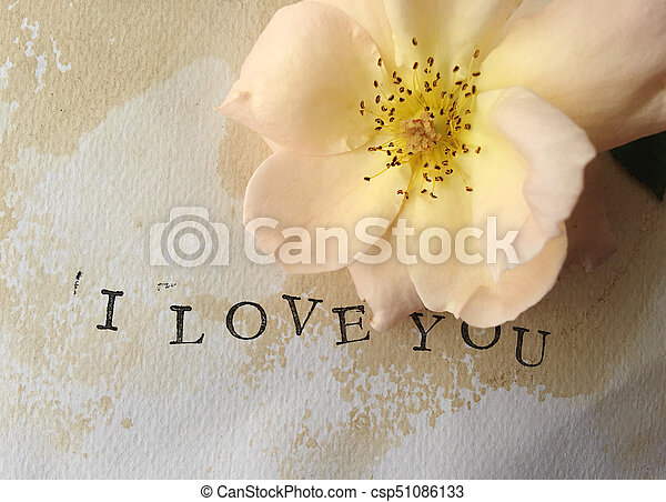 Pale rose with I love you words - csp51086133