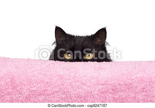 Escondiendo un gato negro - csp9247187
