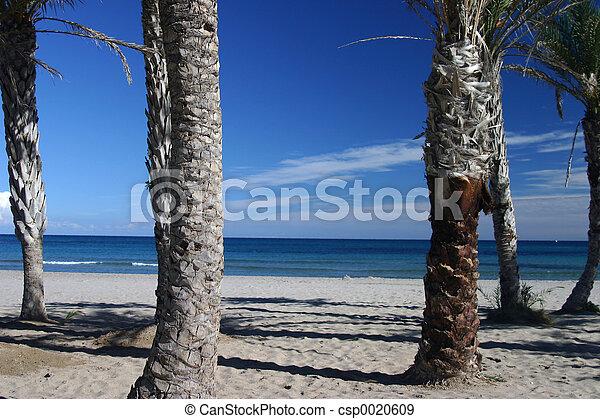 palm beach - csp0020609
