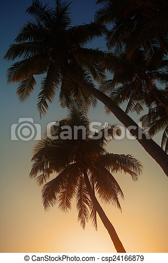 Palm in the sunset - csp24166879