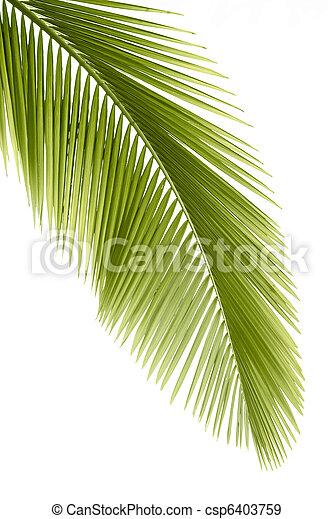 Palm leaf - csp6403759