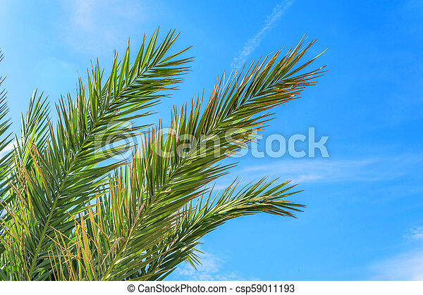Palm leaves against blue sky. - csp59011193