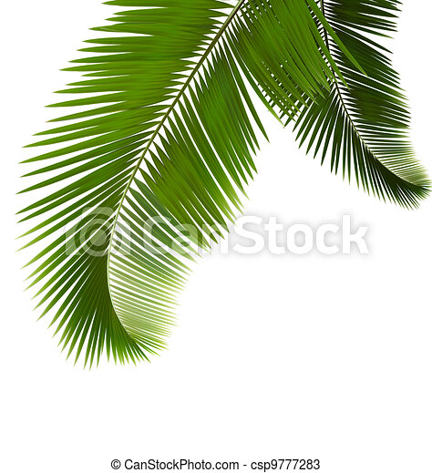 Palm leaves on white background - csp9777283