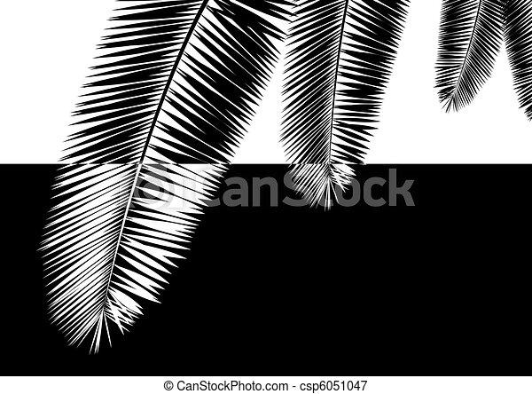 Palm leaves - csp6051047