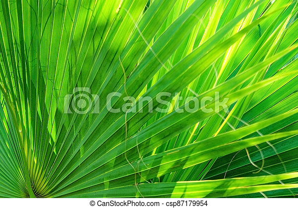 Palm leaves texture decoration resource with shadow - csp87179954