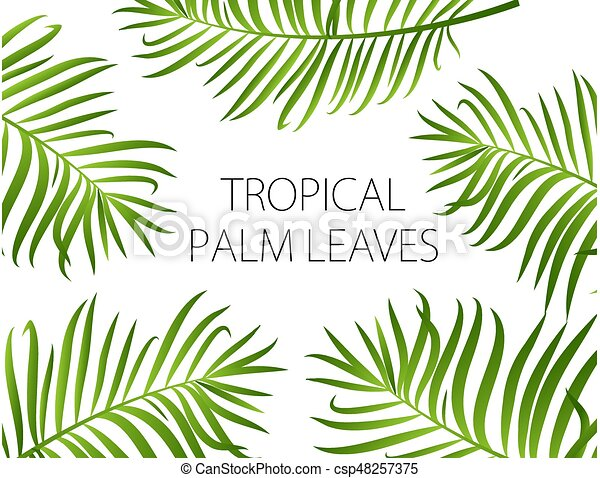Palm Leaves Vector Background Palm Leaf Vector Background Green Leaves On White Background With Place For Your Text Canstock ✓ free for commercial use ✓ high quality images. https www canstockphoto com palm leaves vector background 48257375 html