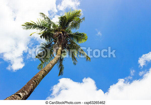 Palm on the blue sky background - csp63265462