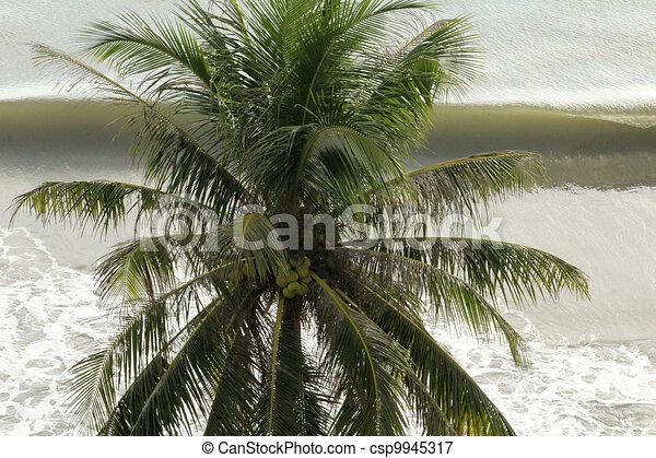 palm - csp9945317