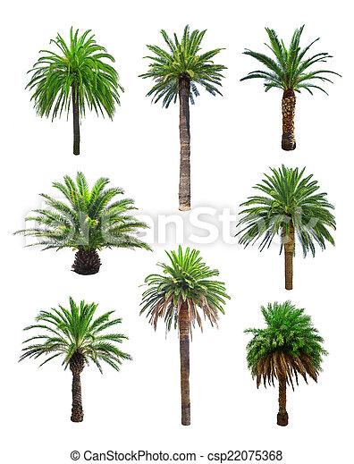 palm - csp22075368