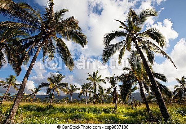 Palm - csp9837136