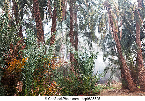 Palm - csp9838525