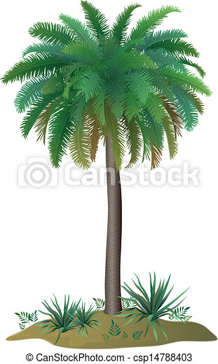 Palm tree and plants - csp14788403