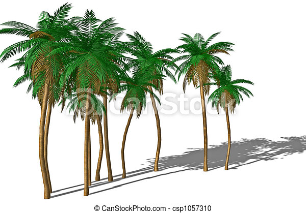 Palm tree and shadow. - csp1057310