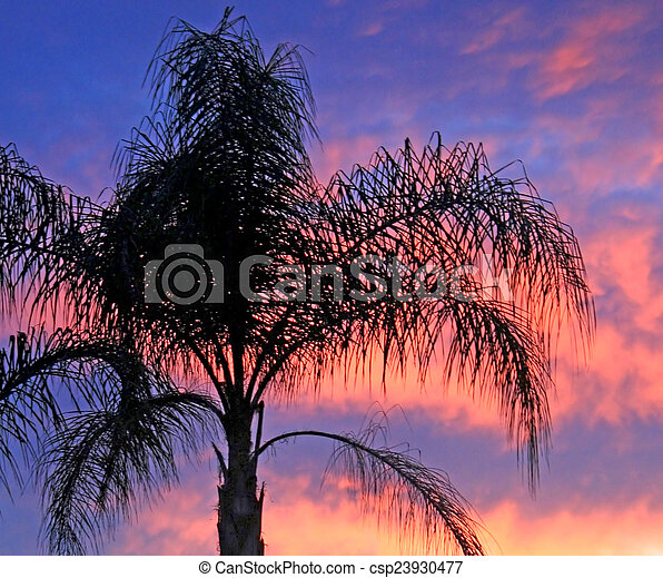 Palm Tree at Sunset - csp23930477