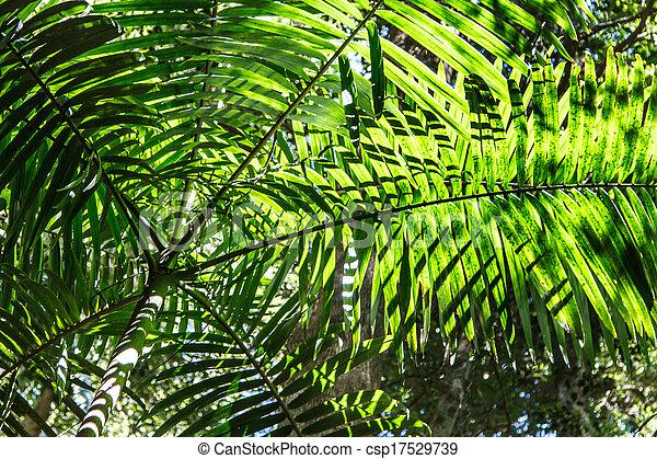 Palm Tree Canopy - csp17529739