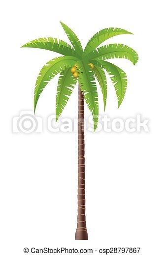 Palm tree - csp28797867