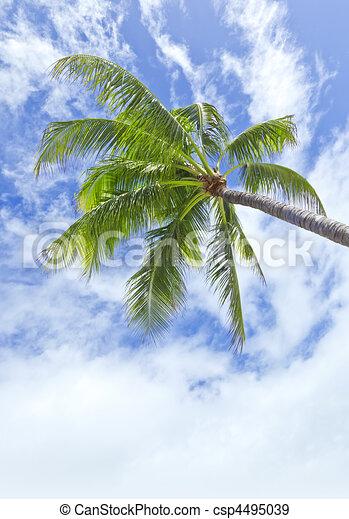 palm tree - csp4495039