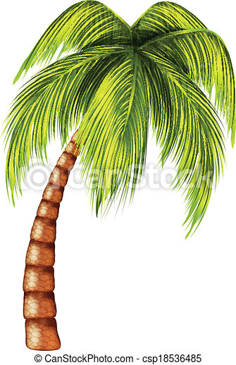 Palm tree vector search clip art illustration drawings and eps palm tree csp18536485 voltagebd Images