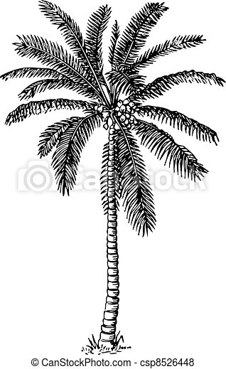 Palm tree - csp8526448