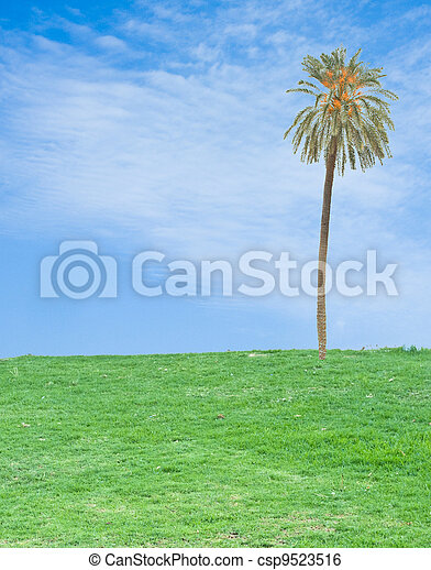 palm tree in field - csp9523516