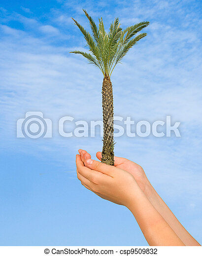 Palm tree in hands - csp9509832
