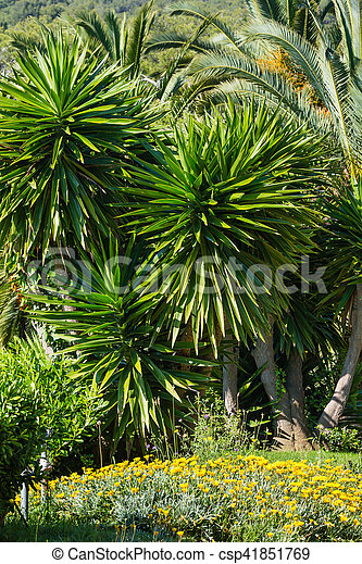 Palm tree in summer park palm trees and yellow flowers in nature park palm tree in summer park csp41851769 mightylinksfo