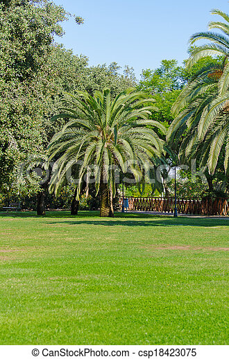 Palm tree in the park. - csp18423075